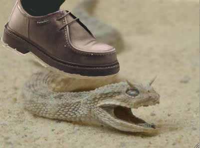 serpentcornupied20dessus.jpg